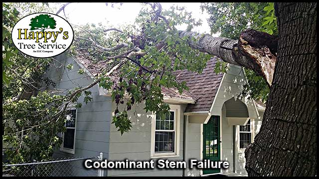 Pinellas County fl 24 hour emergency tree service company