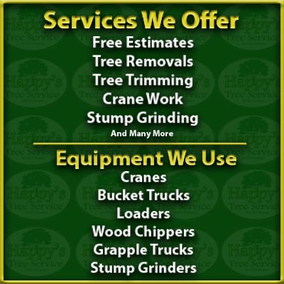 tree service in clearwater fl
