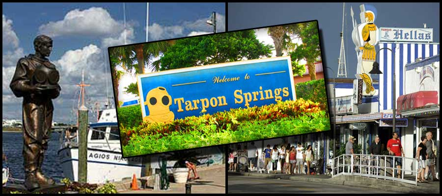 Tarpon Springs fl Tree Service