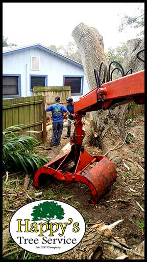 tree removal clearwater fl