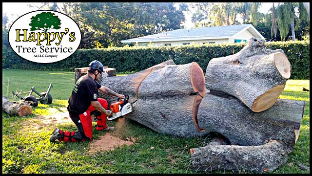 Tree removal pinellas
