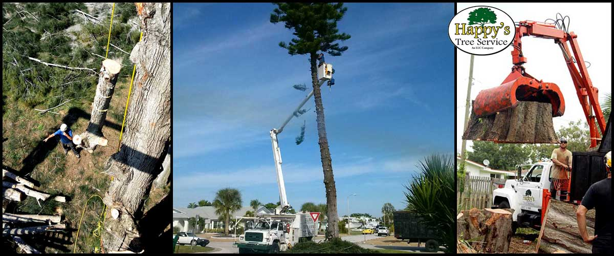 tree removal Pinellas county