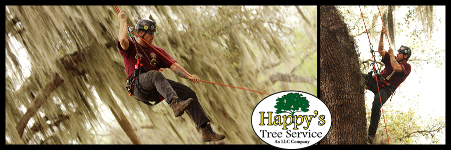 tree trimming pinellas county