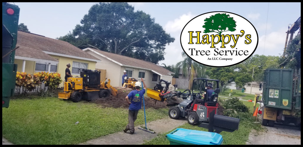 Stump grinding in clearwater fl